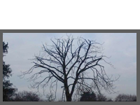 Tree Reduction Case Study 1