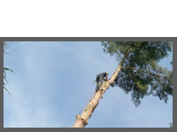 Tree Removal Case Study 2