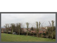 Local Authority Contracts Case Study 2